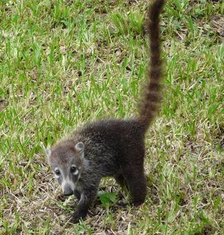 Panama Jungle Tours