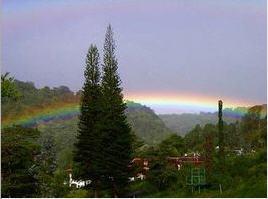 Rainbowboquete