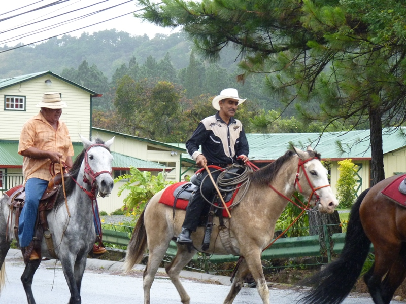 Horseprade4