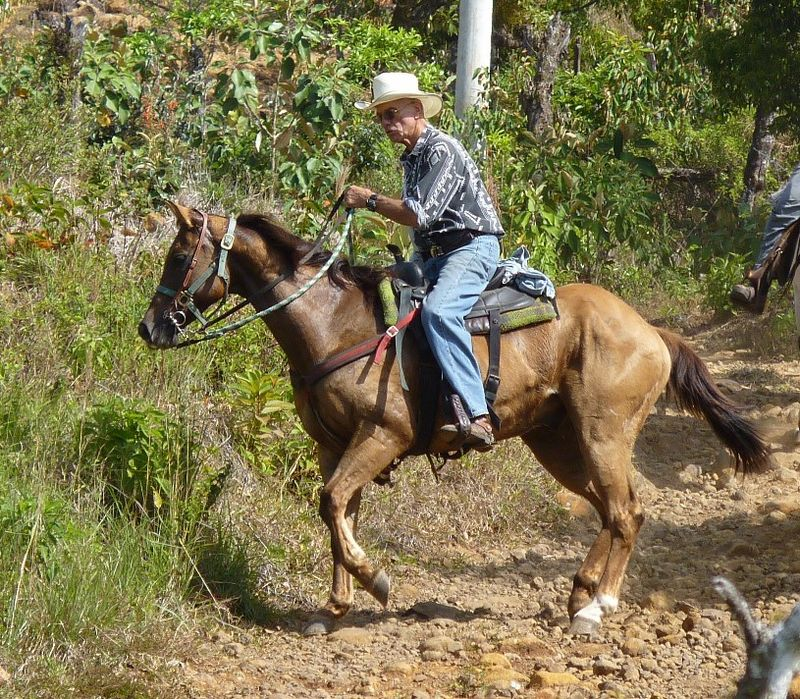 Rogerand horse