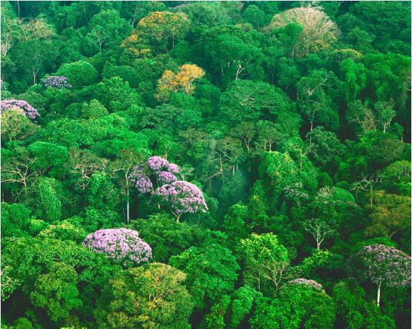 Rainforesttreetopsecologytoday